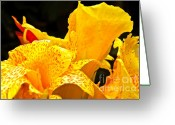 Canna Greeting Cards - Yellow Canna Greeting Card by Brian Dean Alvarez