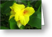 Canna Greeting Cards - Yellow Canna Closeup Greeting Card by Len Lorette