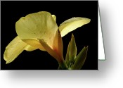Canna Greeting Cards - Yellow Canna Greeting Card by Jeannie Burleson