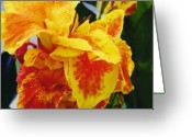 Canna Greeting Cards - Yellow Canna Greeting Card by Renee Cain-Rojo