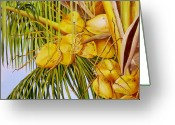 Cuban Painter Greeting Cards - Yellow Coconuts- 01 Greeting Card by Dominica Alcantara
