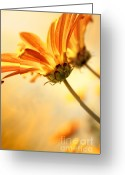 Pollen Greeting Cards - Yellow Daisies Greeting Card by Carlos Caetano