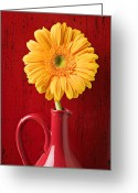 Gerbera Greeting Cards - Yellow daisy in red vase Greeting Card by Garry Gay