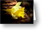 Colorful Photography Greeting Cards - Yellow Edge Greeting Card by Karen M Scovill