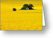 Rapeseed Greeting Cards - Yellow Greeting Card by Evgeni Dinev