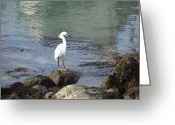 Waterbird Greeting Cards - Yellow Feet at Agua Hedionda Greeting Card by Jim Vansant