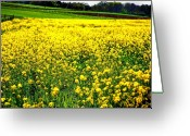 Flowers Photographs Greeting Cards - Yellow Field Greeting Card by Bill Cannon