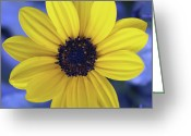 Tickseed Greeting Cards - Yellow Flower 3 Greeting Card by Skip Nall