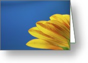 Clear Photo Greeting Cards - Yellow Flower Greeting Card by www.Asif-Ali.com