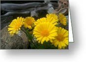 Flower Cards Greeting Cards - Yellow Flowers by Shawna Erback Greeting Card by Shawna Erback