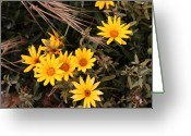 William And Magdalena Green Greeting Cards - Yellow flowers Greeting Card by Magdalena Green