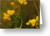 Kitchen Photos Greeting Cards - Yellow flowers Greeting Card by Toma Bonciu