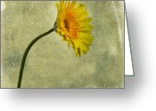Oldfashioned Greeting Cards - Yellow Gerbera Greeting Card by Bernard Jaubert