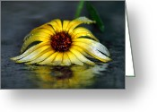 Photography Tk Designs Greeting Cards - Yellow Gerbera Daisy In Downpour Greeting Card by Tracie Kaska