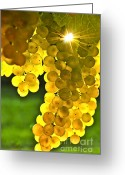 Translucent Greeting Cards - Yellow grapes Greeting Card by Elena Elisseeva