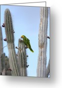 Amazon Parrot Greeting Cards - Yellow-headed Amazon Parrot, Amazona Greeting Card by George Grall