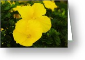 Tropical Photographs Greeting Cards - Yellow Hibiscus Greeting Card by John  Greaves
