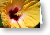 Yellow Greeting Cards - Yellow Hibiscus Greeting Card by Kimberly Gonzales