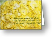 Isaiah Greeting Cards - Yellow Hydrangea Isaiah 42v10 Greeting Card by Linda Phelps