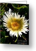 Succulents Greeting Cards - Yellow Ice Plant Flower . carpobrotus edulis succulent . 7D15078 Greeting Card by Wingsdomain Art and Photography