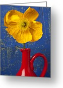  Iceland Greeting Cards - Yellow Iceland Poppy Red Pitcher Greeting Card by Garry Gay