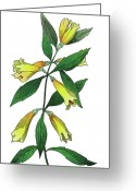 Straitlaced Greeting Cards - Yellow Jessamine Greeting Card by Ziva