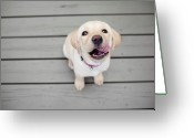 Labrador Retriever Greeting Cards - Yellow Lab Puppy Greeting Card by Image by Erin Vey