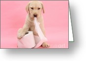 Toilet Paper Greeting Cards - Yellow Labrador Puppy With Toilet Paper Greeting Card by Mark Taylor