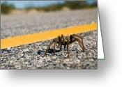 Rural Road Greeting Cards - Yellow Line Spider 2 Greeting Card by Wayne Stadler