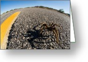 Yellow Line Greeting Cards - Yellow Line Spider Greeting Card by Wayne Stadler