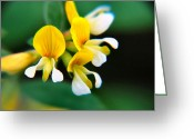 Greens Framed Prints Greeting Cards - Yellow Macro Greeting Card by Wendy McKennon