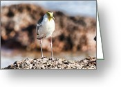 Lapwing Greeting Cards - Yellow Mask Greeting Card by Douglas Barnard