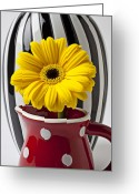 Stripes Greeting Cards - Yellow mum in pitcher  Greeting Card by Garry Gay
