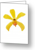 On White Greeting Cards - Yellow Orchid Greeting Card by Atiketta Sangasaeng