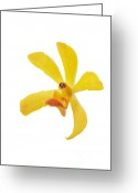 On White Greeting Cards - Yellow Orchid Head Greeting Card by Atiketta Sangasaeng