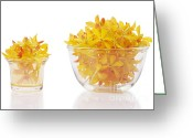 Vibrant Photo Greeting Cards - Yellow Orchid Heads Greeting Card by Atiketta Sangasaeng
