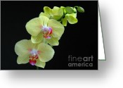 Flower Over Black Photo Greeting Cards - Yellow Orchidee Greeting Card by Juergen Roth