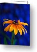 Yellow Flower Digital Art Greeting Cards - Yellow Petal Blues Greeting Card by Bill Tiepelman