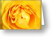 Pdx Greeting Cards - Yellow Petals Greeting Card by Cathie Tyler