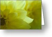 Macro Greeting Cards - Yellow Petals Greeting Card by Jose Valeriano