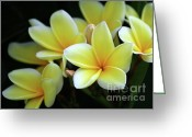 Tropical Gardens Greeting Cards - Yellow Plumeria Cascade Greeting Card by Sabrina L Ryan