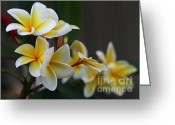Florida Flowers Greeting Cards - Yellow Plumeria Flowers Greeting Card by Sabrina L Ryan