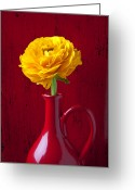 Ranunculus Photo Greeting Cards - Yellow Ranunculus In Red Pitcher Greeting Card by Garry Gay