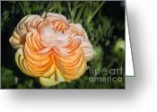 Bud Greeting Cards - Yellow Ranunculus Greeting Card by Joan Carroll