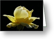 Thorn Greeting Cards - Yellow Rose Greeting Card by Ernie Echols