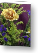 Kevin Sherf Greeting Cards - Yellow Rose of New Jersey Greeting Card by Kevin  Sherf