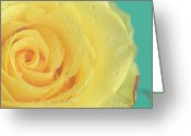 Single Rose Greeting Cards - Yellow Rose With Dew Drops Greeting Card by Maria Kallin