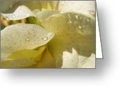 Canna Greeting Cards - Yellow Speckled Canna Lily Greeting Card by Sandi Floyd