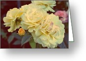 Cream Roses Greeting Cards - Yellow Sunshine Greeting Card by Cathie Tyler
