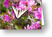 Swallow Tail Butterfly Greeting Cards - Yellow Swallow Tail Butterfly Greeting Card by Lena Auxier